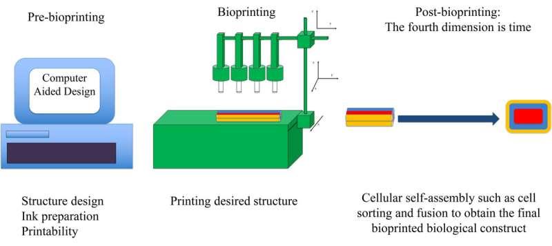 Using physics to print living tissue