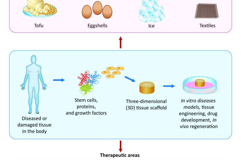 Using unconventional materials, like ice and eggshells, as scaffolds to grow tissues