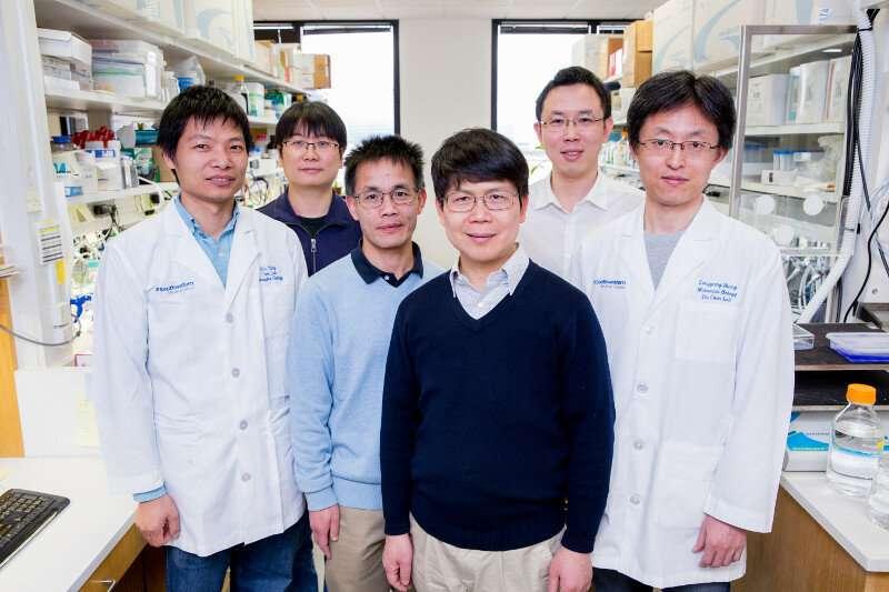 UTSW researchers determine structures of elusive innate immunity protein