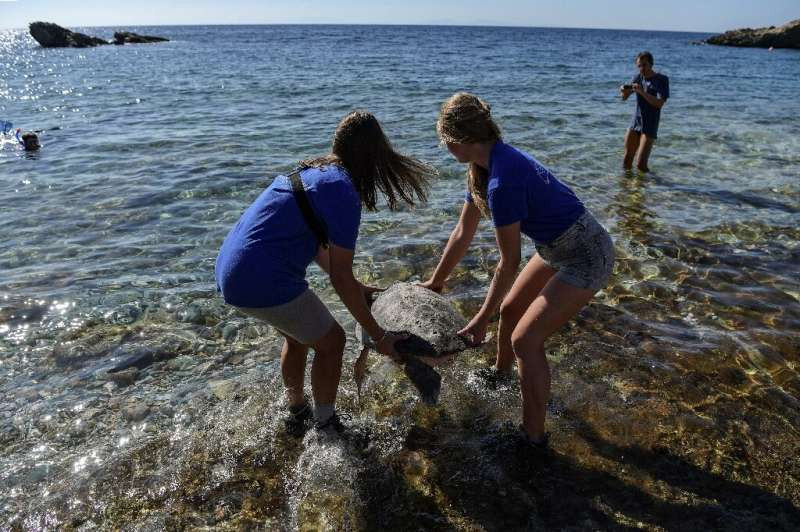 Volunteers on the beaches of Kyparissia Bay in Greece, the Mediterranean's largest nesting ground for the loggerhead, help the t