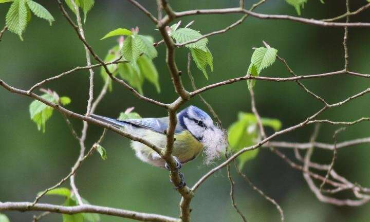 **Warmer nights prompt birds to lay eggs earlier