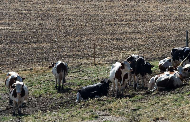"""Water restrictions hit farmers hard, with """"crisis"""" alerts in some areas of France"""