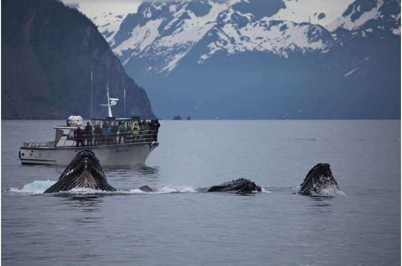 whale baleen