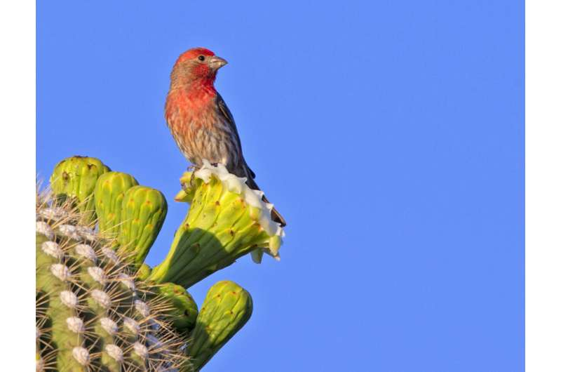 What the vibrant pigments of bird feathers can teach us about how evolution works