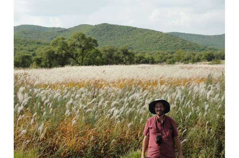 When temperatures drop, Siberian Miscanthus plants surpass main bioenergy variety