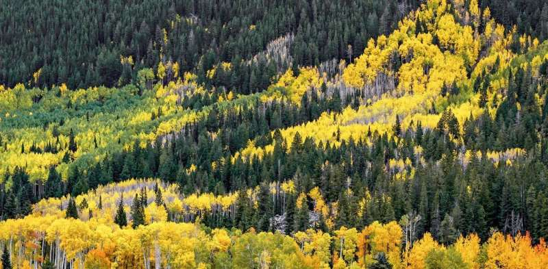 Why don't evergreens change color and drop their leaves every fall?