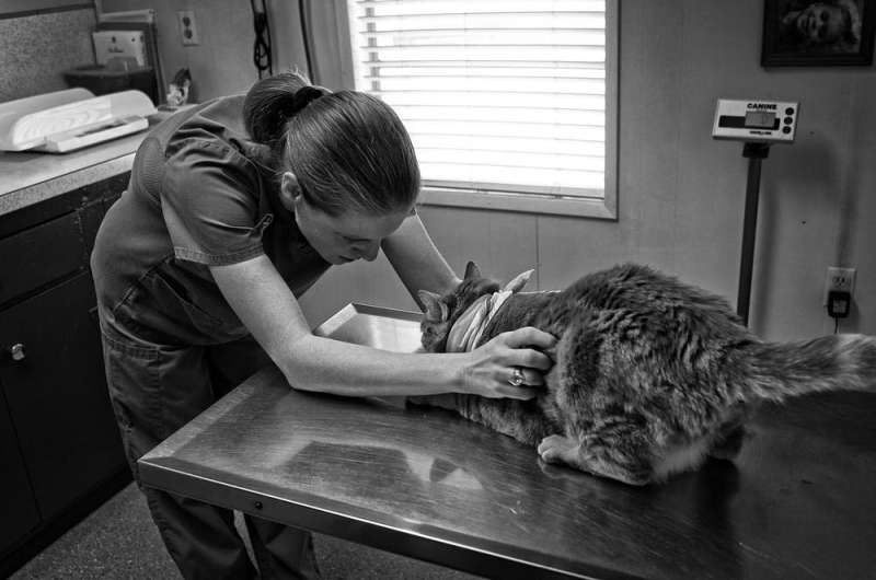 Why your veterinarian may refuse to euthanise your pet