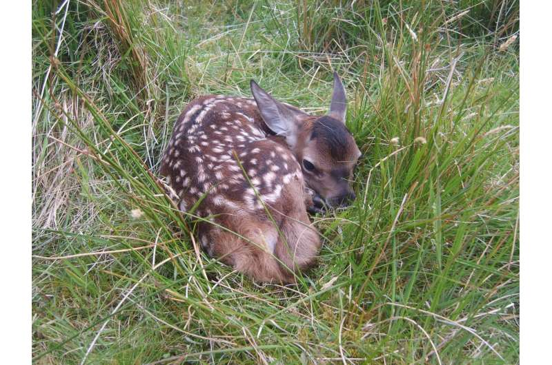 Wild animals evolving to give birth earlier in warming climate
