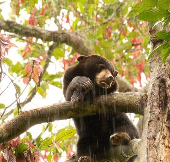 Wildlife in tropics hardest hit by forests being broken up