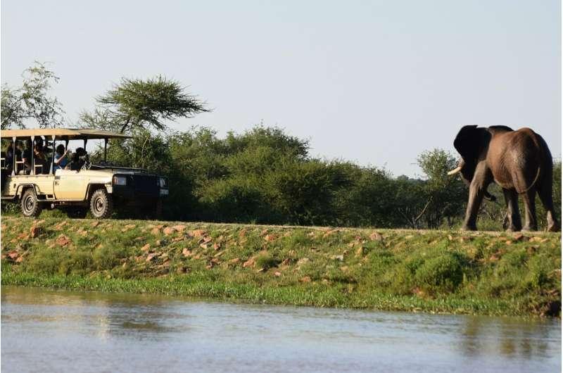 Wildlife tourism may negatively affect African elephants' behavior