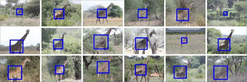 Wild Nature Institute, Penn State, and Microsoft Azure Work Together to Find the Giraffe in the Bushes