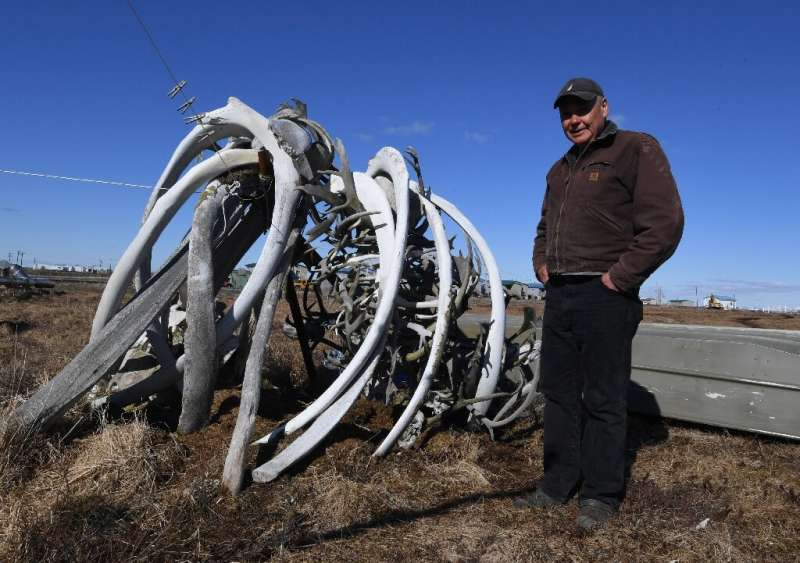 Willard Church Jr., a member of the Yupik Eskimo community, stands next to old whale bones outside his house in the town of Quin