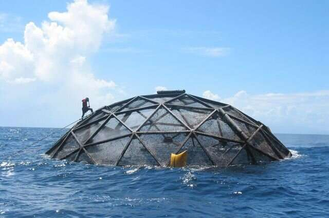 Will ocean seafood farming sink or swim? Study evaluates its potential