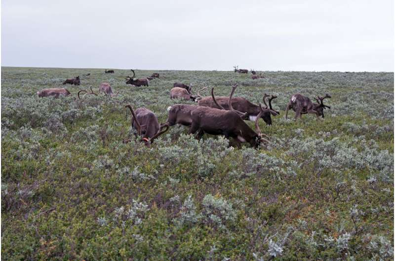 Willow-dominated wetlands of Lapland fells are resilient to reindeer grazing