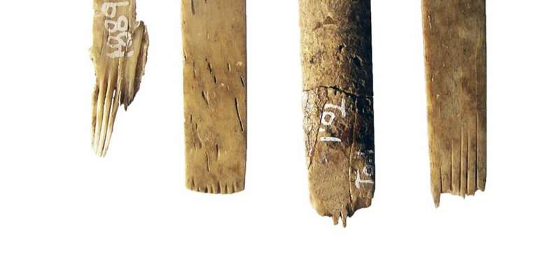 World's oldest tattooist's toolkit found in Tonga contains implements made of human bone
