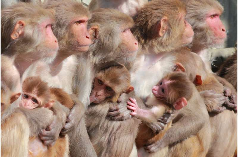 Zika vaccine protects fetus in pregnant monkeys
