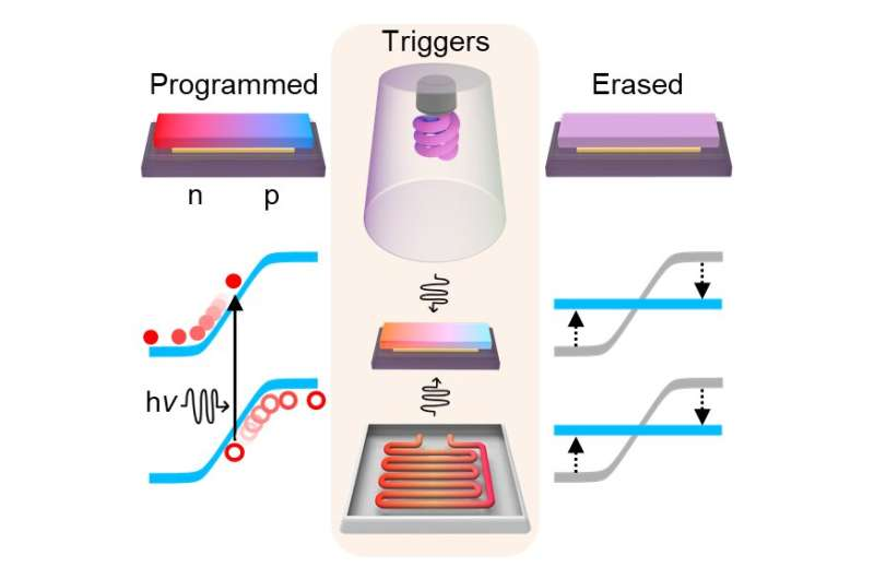 Programmable electronics based on the reversible doping of 2D semiconductors