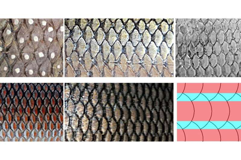 Aerodynamicists reveal link between fish scales and aircraft drag