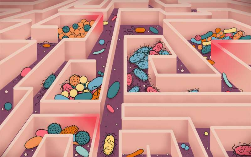 Aging and nutrients competition determine changes in microbiota