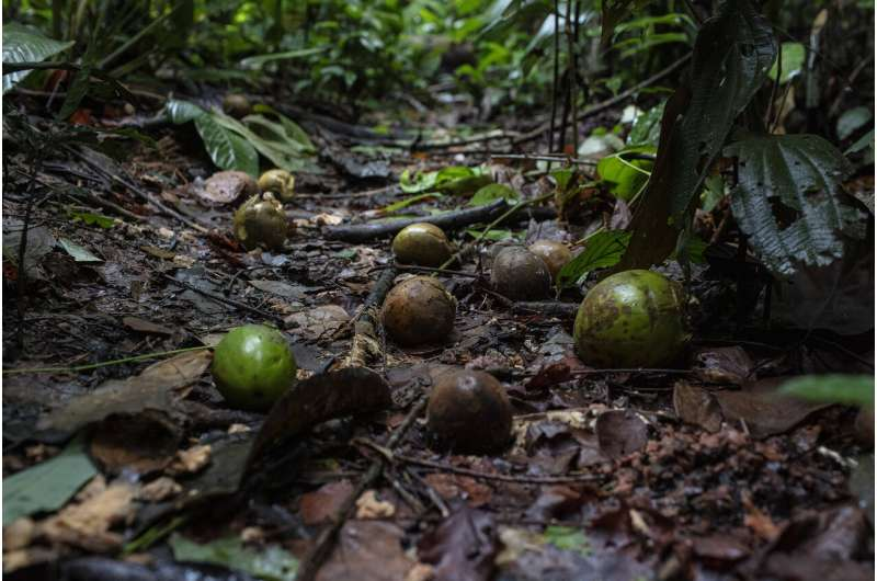 Amazon forest disturbance is changing how plants are dispersed