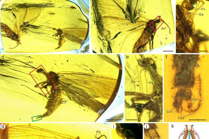 Amber specimens reveal origin of long mouthpart of scorpionflies