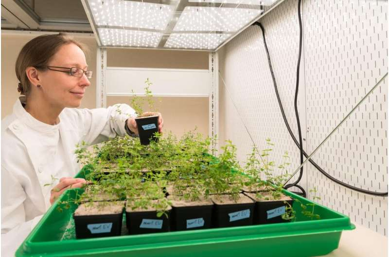 A molecular break for root growth