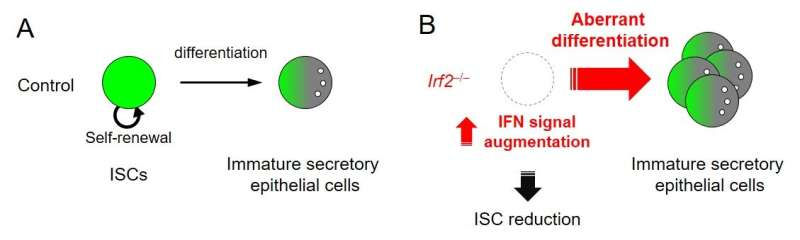 A new molecular guardian of intestinal stem cells