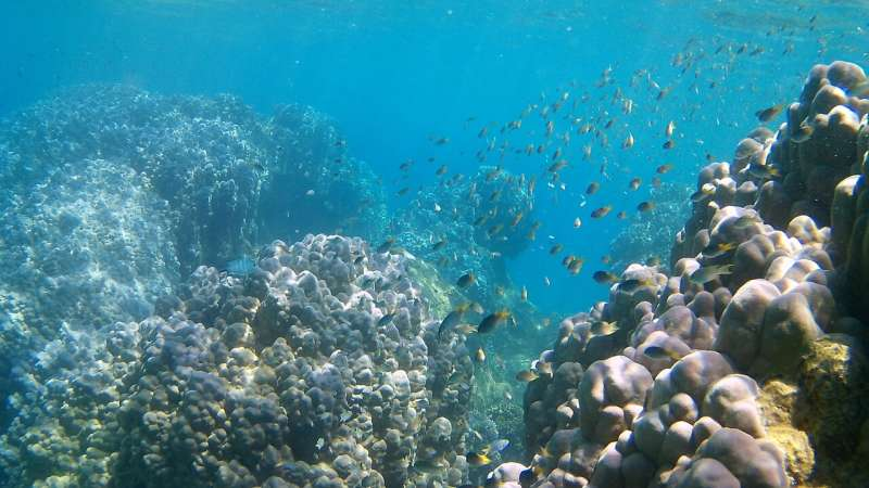Applying environmental genomics to coral conservation