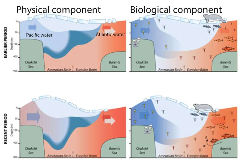 Arctic Ocean changes driven by sub-Arctic seas