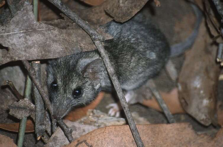 A season in hell: bushfires push at least 20 threatened species closer to extinction