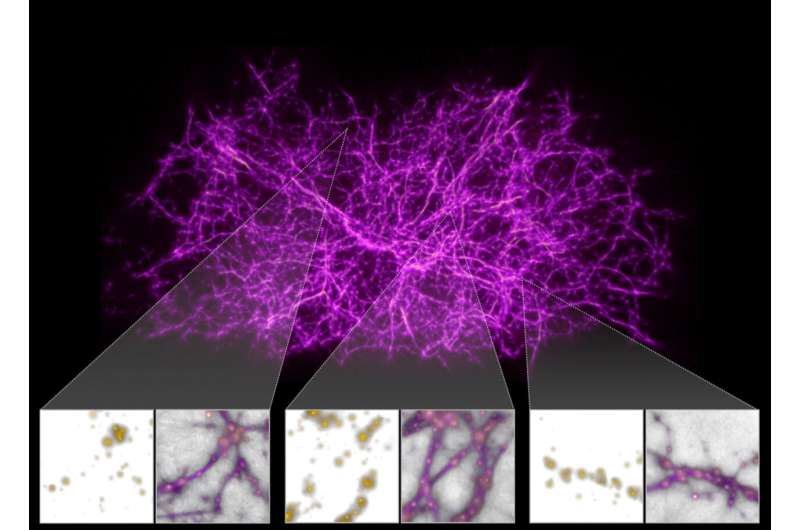 Astronomers use slime mold model to reveal dark threads of the cosmic web