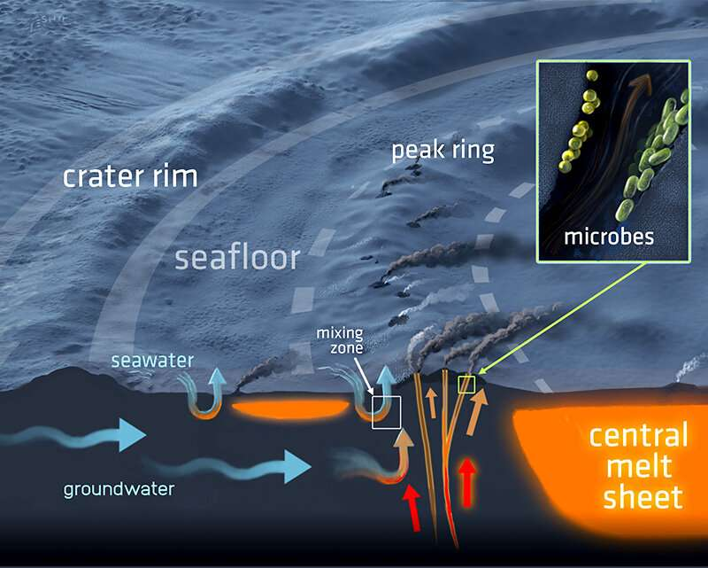 A Subterranean ecosystem in the Chicxulub crater