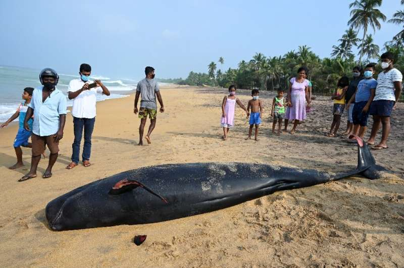At least two whales were found dead on the beach in Panadura, Sri Lanka