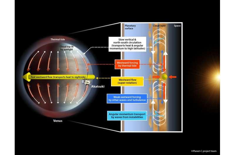 Atmospheric tidal waves maintain Venus' super-rotation