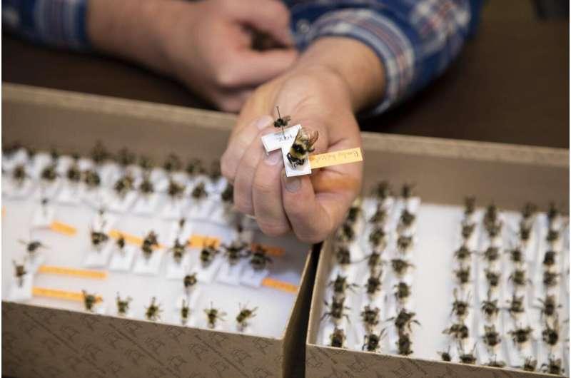 Bark beetle outbreaks benefit wild bee populations, habitat