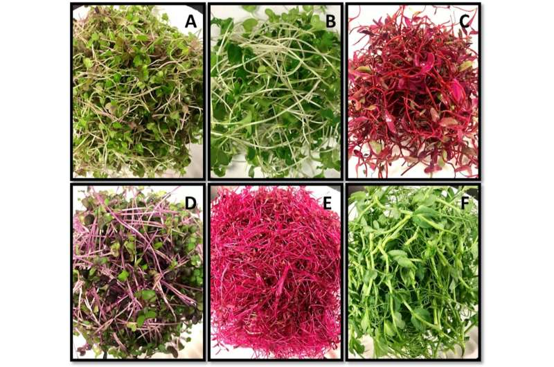 Beyond the garnish: Will a new type of produce get the microgreen light?