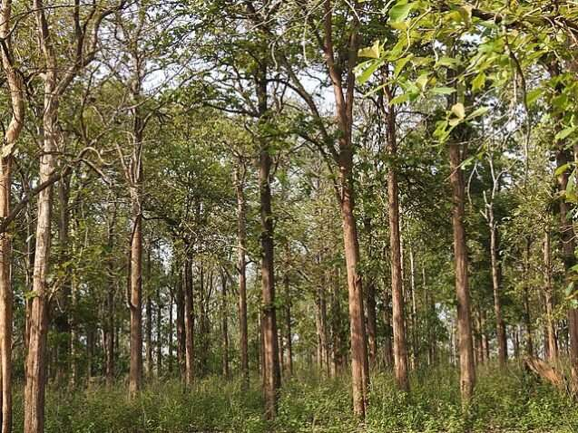 Biodiverse forests better at storing carbon for long periods, says study