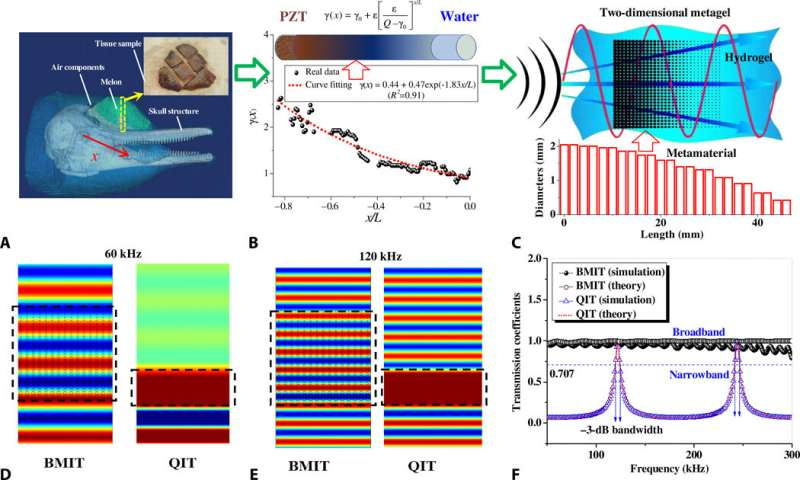 Bioinspired metagel with broadband tunable impedance matching