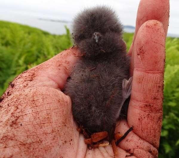 Bird poop and lake mud 'time machine' reveal dramatic seabird declines