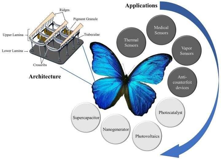 Butterfly wings inspiring next-gen technological innovations