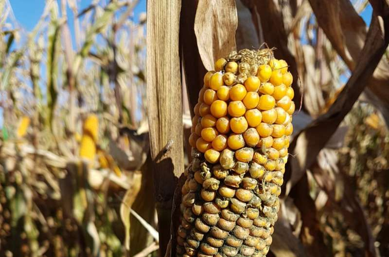 Can organic plant protection products damage crops?