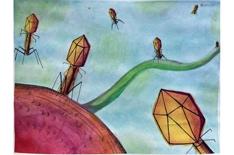 Cataloging nature's hidden arsenal: Viruses that infect bacteria