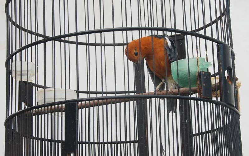 Characterising Indonesia's bird-owners guides behaviour change amid Asian Songbird Crisis