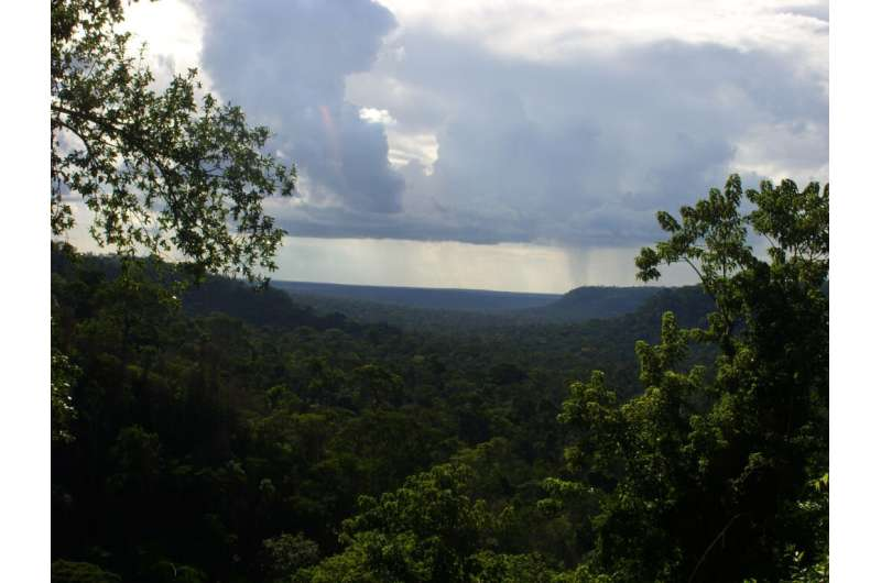 Climate may play a bigger role than deforestation in rainforest biodiversity