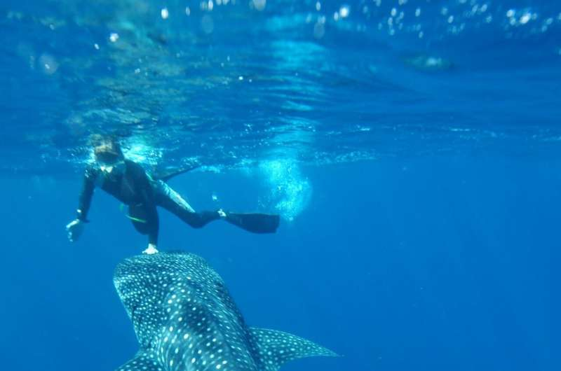 Cold War nuclear bomb tests reveal true age of whale sharks