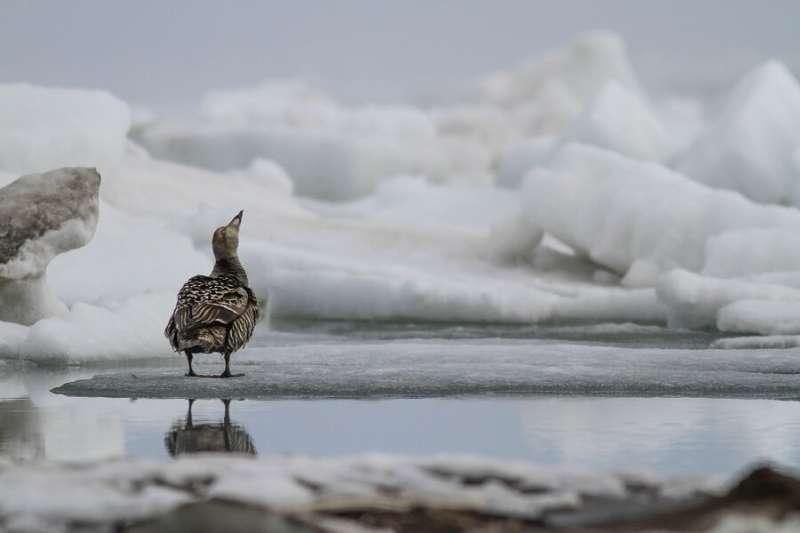 Common species mirror rare animals' response to global change