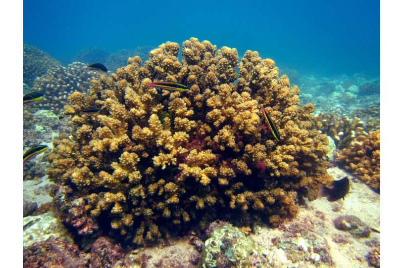 Coral reefs show resilience to rising temperatures