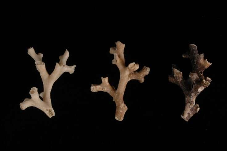 Coral time machines reveal ancient CO2 burps