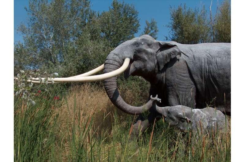 Dead elephant was a feast for the entire neighbourhood