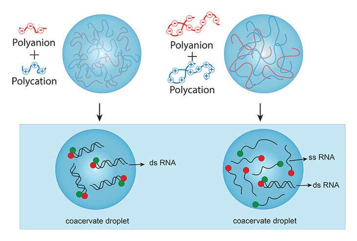 Did early life need long, complex molecules to make cell-like compartments?